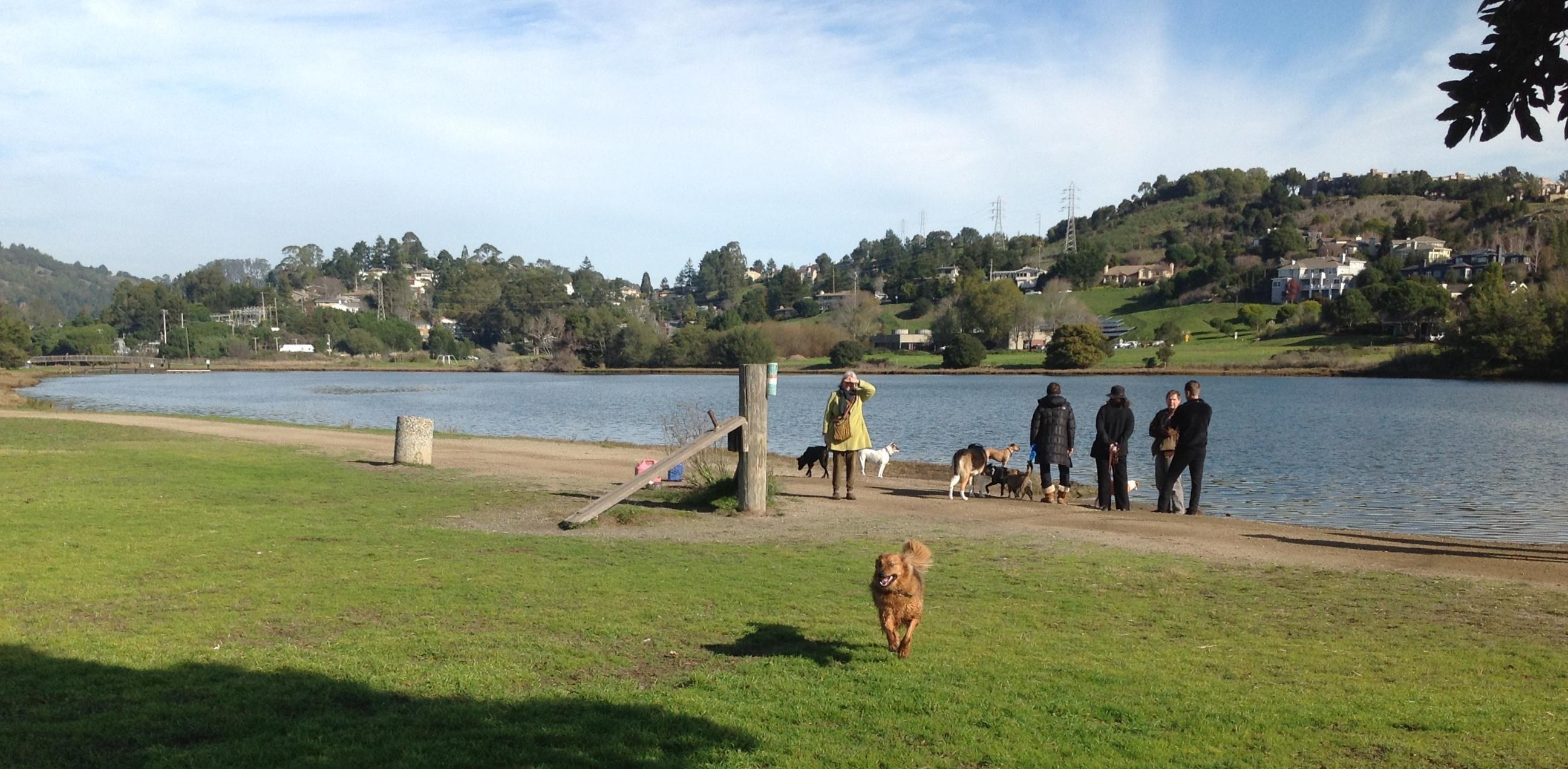 Dog Paddle Area